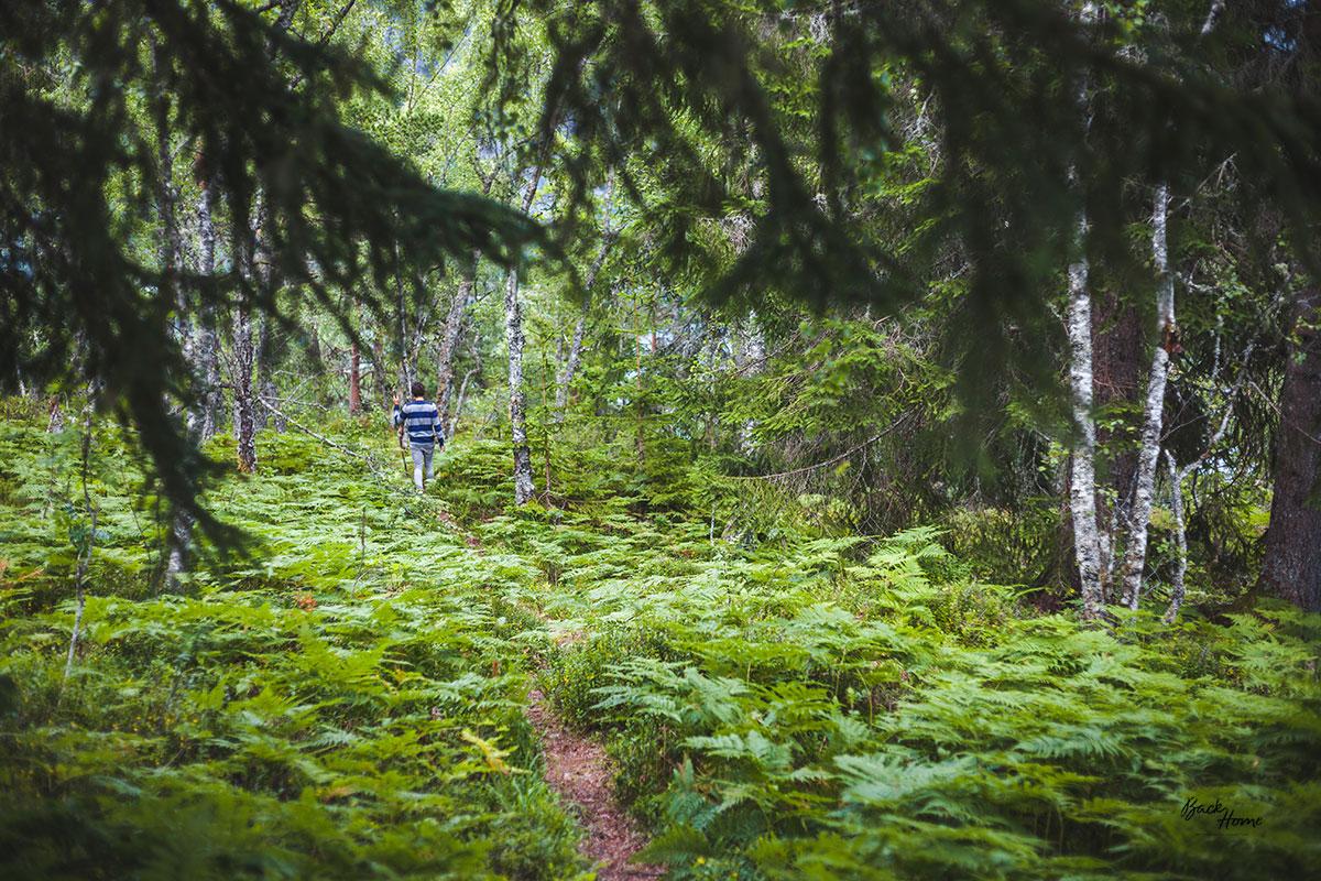 roadtrip-por-noruega-dragsvik-bosque